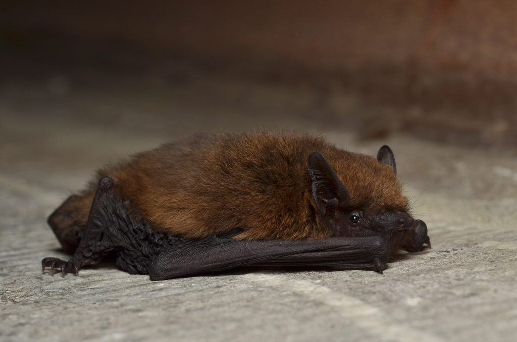 planning for buildings with bats